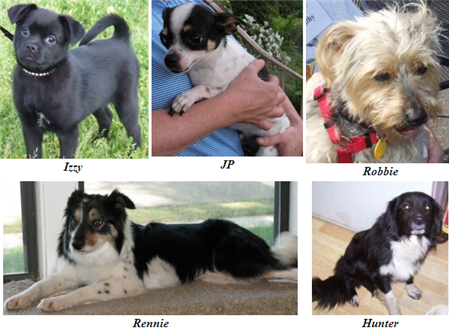 Adoptions on May 3 2008