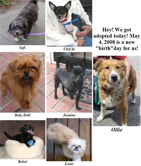 May 4 2008 Adoptions