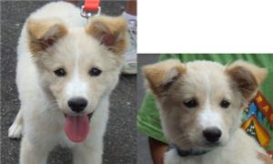 Blondie gets adopted