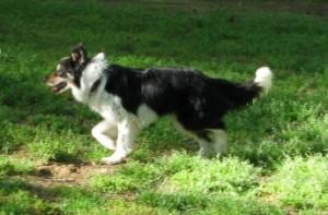 Rennie Running