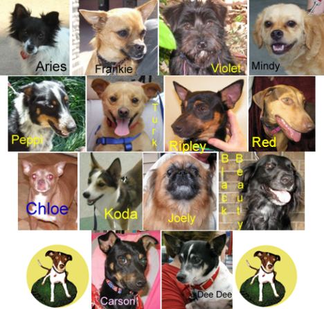Just a few of the great dogs and puppies of Good Dog Rescue who are looking for their forever home.