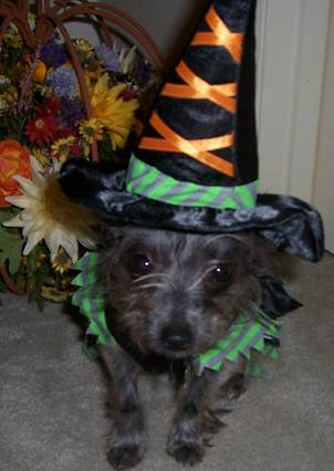 Fanny Brice, now Pigeon, in her Halloween Witch costume
