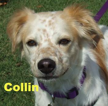 collin1