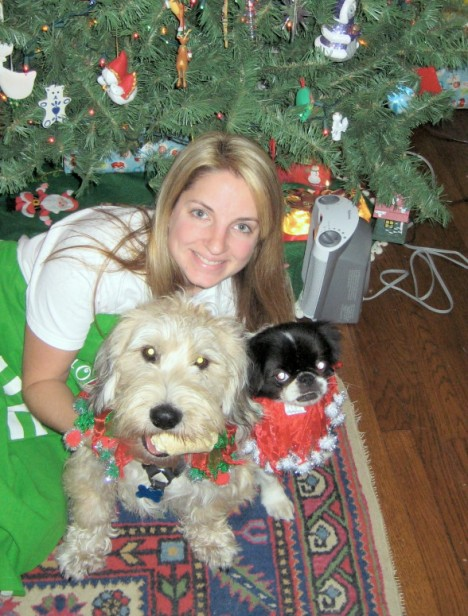 JJ, now Barley, and some of his new family under the Christmas tree