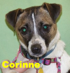 Such a tiny and lovely little terrier is sweet Corinne