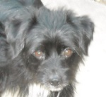 Ziggy when he was with Good Dog Rescue