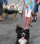 Many of our dogs enjoy a crowd funtime at Miss Cordelia's