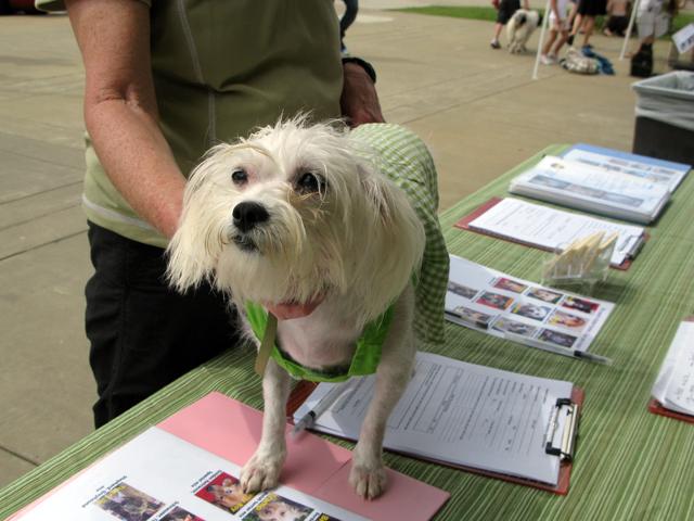 Dog Rescue Sites In Memphis Tn
