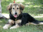 New beautiful & affectionate 6 month old puppy, Tansy.