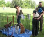 Some of our prior adopters stop to look at our current dogs.