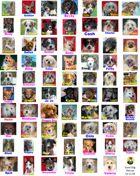 All of Good Dog Rescue's Adoptable Dogs as of October 11 2009