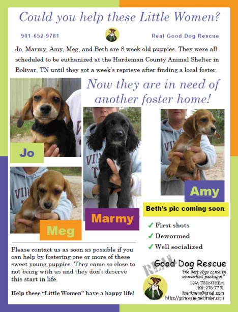 We need a foster home ... or homes!